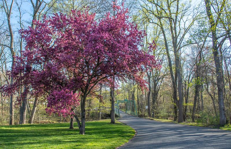 Blossoming Tree & Bridge 4/21/16