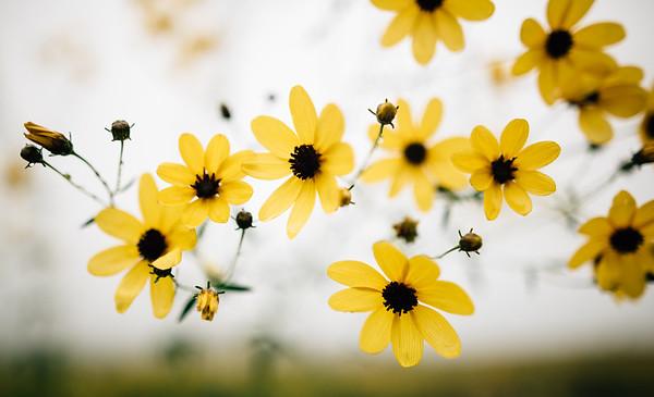 sun blooms