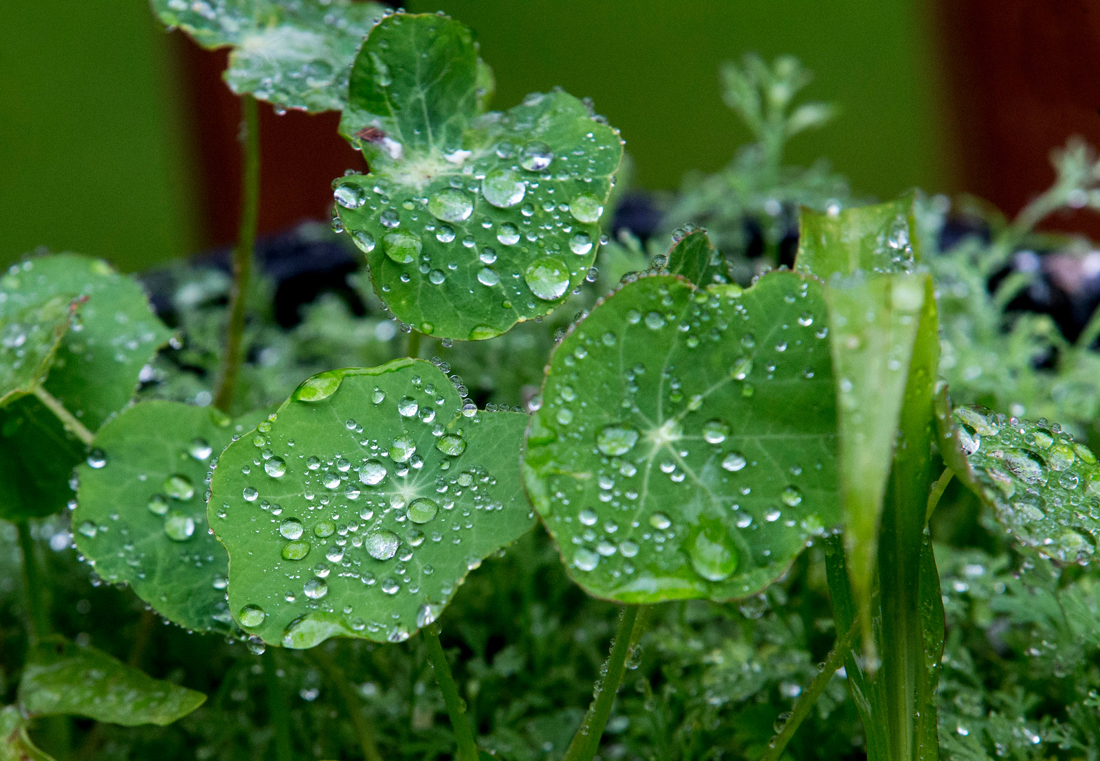 Green and wet