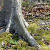 A Step in No Time   Maine coastal region<br /> 2011 Trees as Sculpture Entry