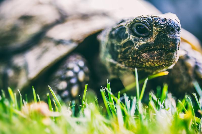 • Schildkröte •
