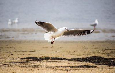 Flight of a bird