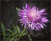 Complicated Blossom