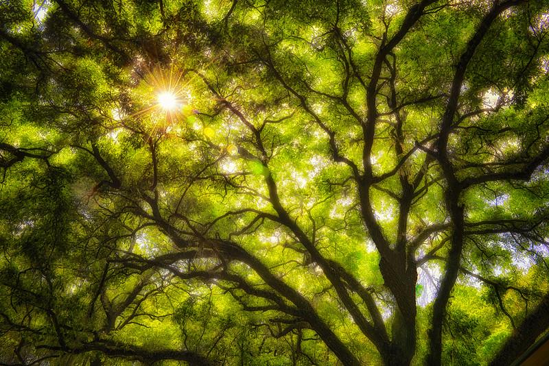 Sunburst through Silhouetted Tree