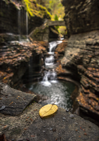 A Leaf at Rainbow Falls in Watkins Glen State Park, NY 10/16/17