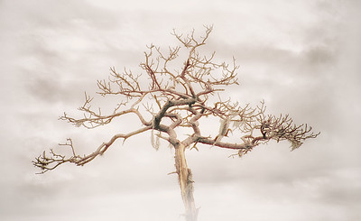 "ETC-3146  ""Gnarly Tree"""