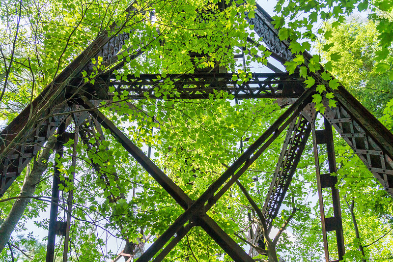 Railroad Bridge in Trees