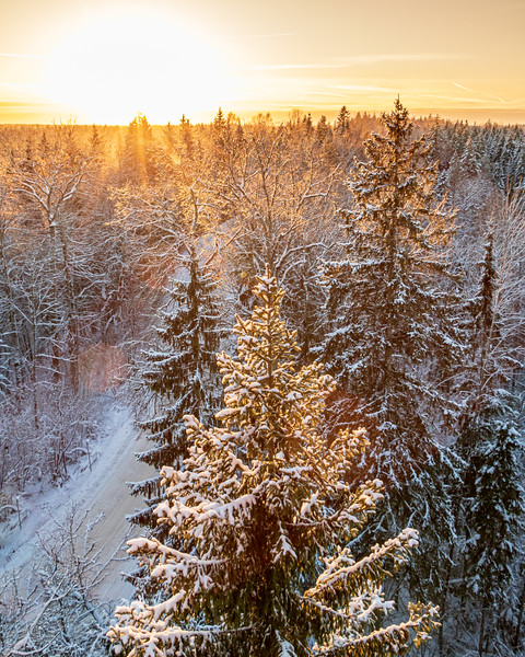Snowy spruce trees from above  in winter sunset in Kangari mountain in Latvia