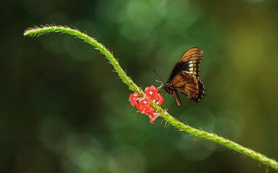 "ETC-3336-WPP1544  ""Balancing Butterfly"""