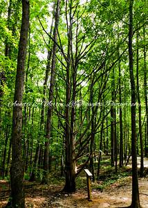 """Sweetwater Creek Trail"" Sweetwater Creek State Park, Lithia Springs GA"