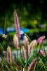 "ETC-3031  ""Purple Grass"""