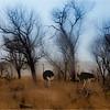 Namibien desert