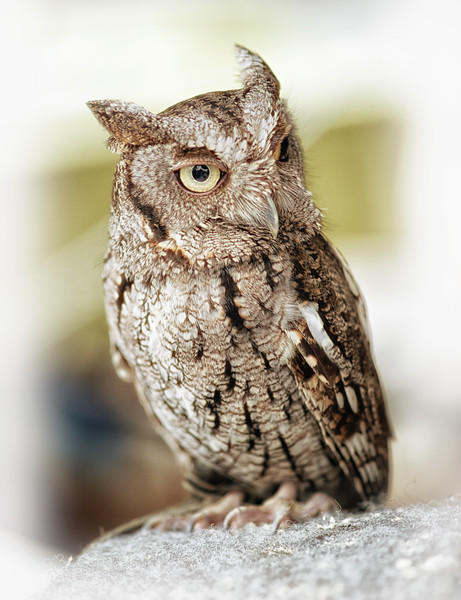 """ETC-3181  """"The Wise Old Owl"""""""
