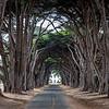 A Cypress Tree Tunnel 11/7/19