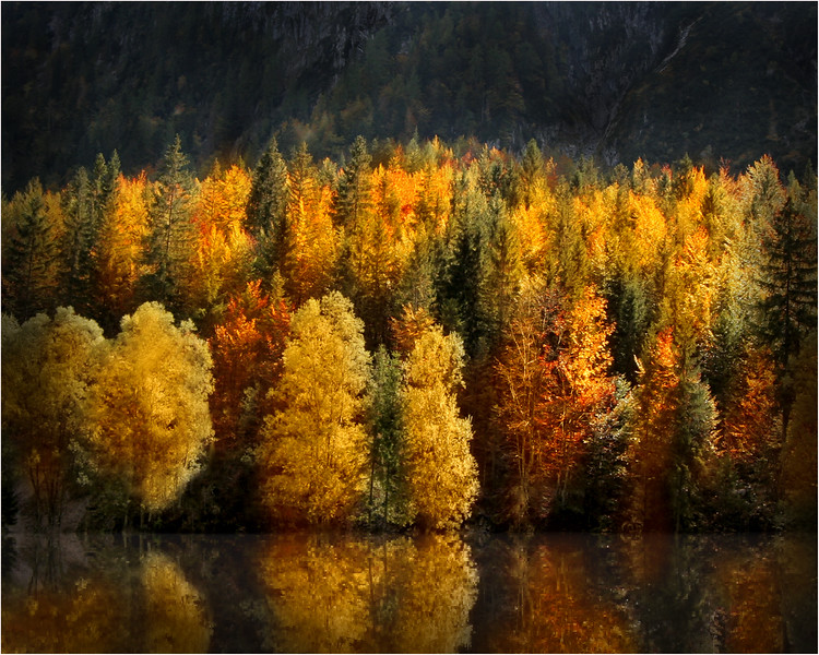 Autum reflection