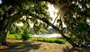 Sunburst Over Broken Branch