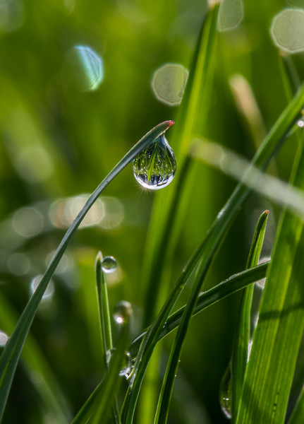 Morning Dew on Blade of Grass 4/15/17