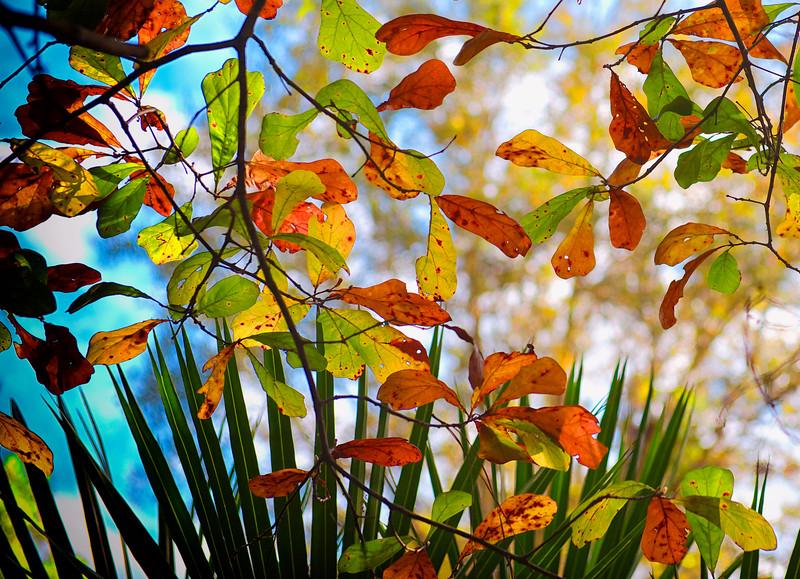 """ETC-3001 """"Colors of Autumn"""""""