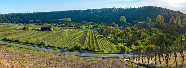Panorama of Vineyards in Germany 4/20/17