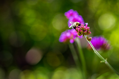 @findthelightphotography-_MG_1836-Edit