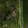 Transformation from tadpole to frog. This was on one of my ponds.