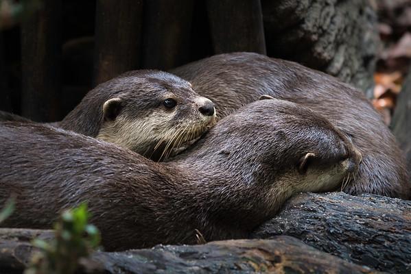 Cuddling up