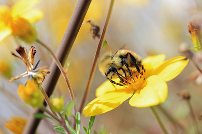 Pollenator 2