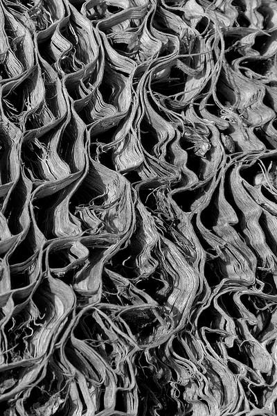 Cactus Interior #1 (black & white)