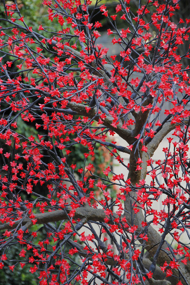 Red Blossoms on Tree