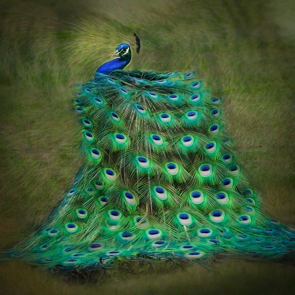 "ETC-3354  ""Peacock Swirl (light)"""