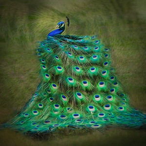 "ETC-3354  ""Peacock Swirl (light)"""
