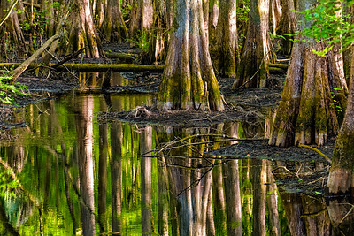 Low Water In The Swamp