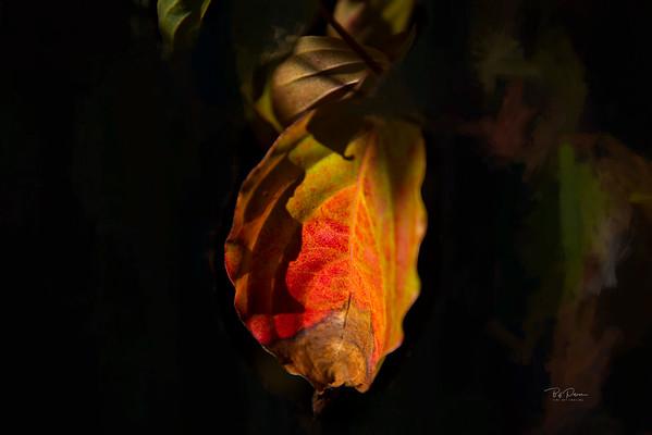 Intimate Autumn 2
