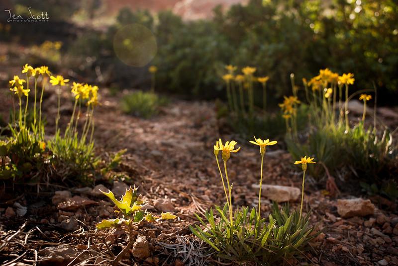Flowers In Bryce