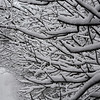 Snow-Covered Branches Along Road, Wall, NJ