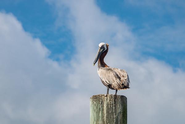 Pelican 6318