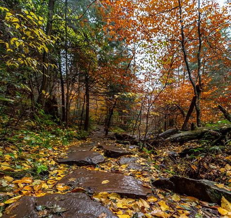 Autumn Scene in Rickett's Glen State Park, PA 11/5/18
