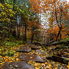 Autumn Scene in Rickett's Glen State Park, PA 11/5/18