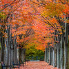 An Autumn Tree Lined Walkway In Princeton, NJ 10/27/20