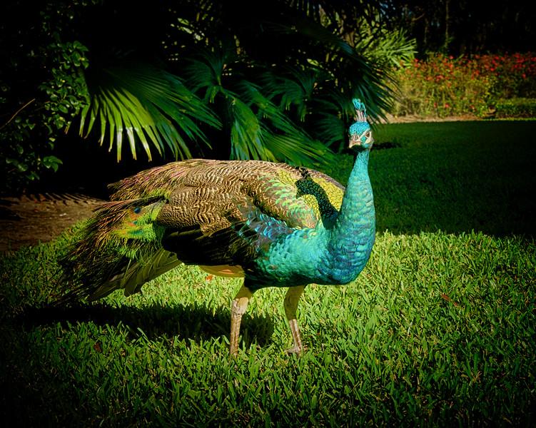 ETC2550    Mr  Peck     JDA_3676_HDR