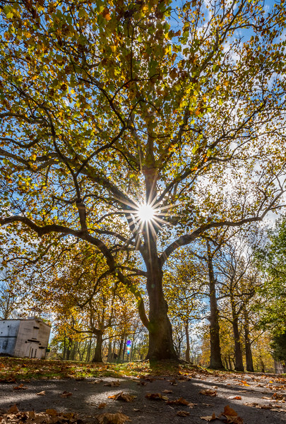 Sun Burst Through Autumn Colors at Allaire State Park 11/2/17