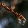 Sparkling Raindrop 4/6/17