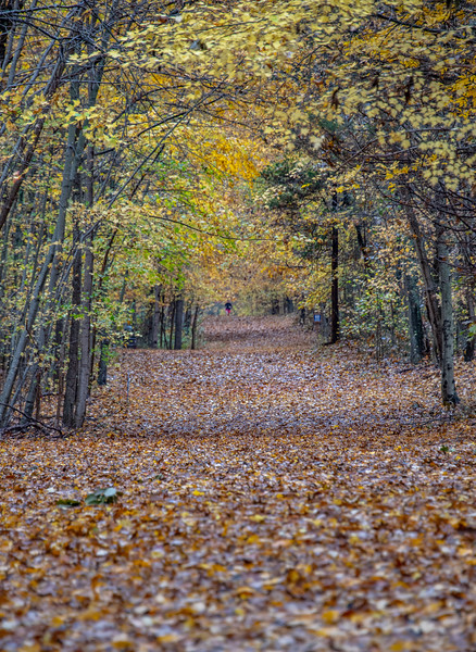 Autumn Colors Over Trail in Manasquan Reservoir 11/3/18