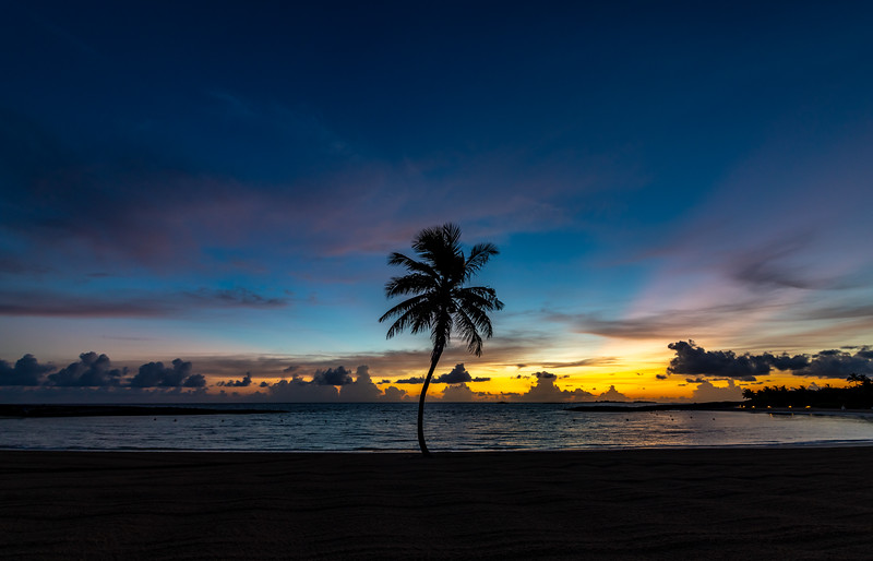 Predawn Colors Over Palm Tree on Beach 7/18/19