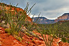 Sedona Arizona Red Rocks with Vegetation