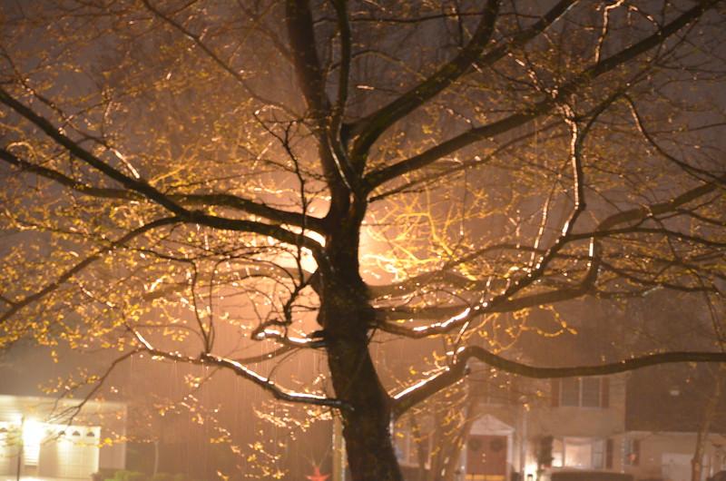 Tree Silhouette During Rainshower