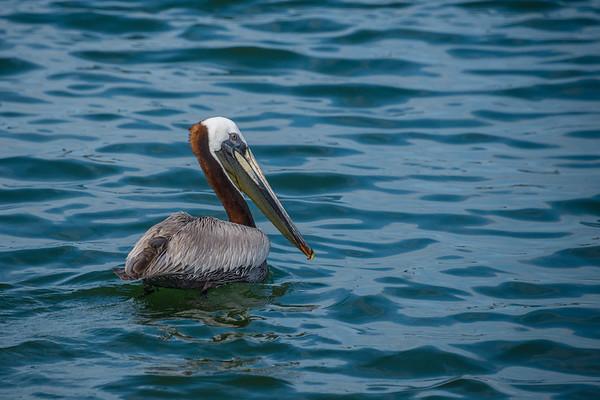 Pelican 6305