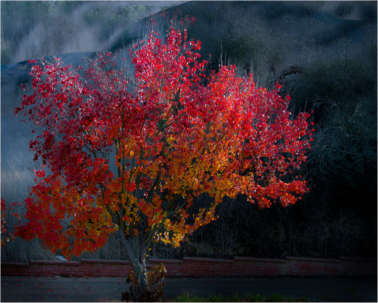 A red wisdom tree