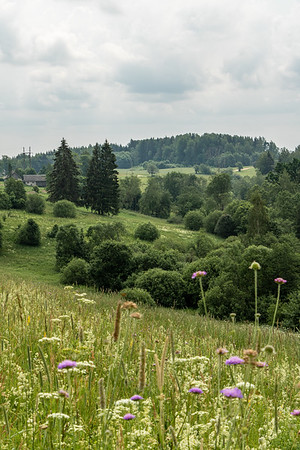 View to green valley with trees and meadow on a summer day in Latvia
