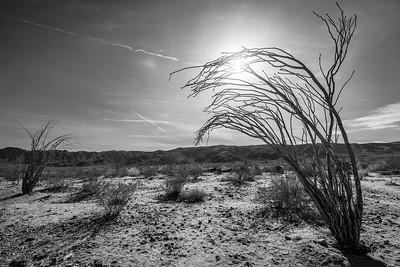 Desert Winter #joshuatree #nationalpark #wildnerness #nature #photography #outdoors #adventure #canon #5dmkiii #hiking #desert #roadtrip #retreat #vacation #landscape
